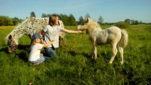 Дети и жеребенок пони. Полесск.