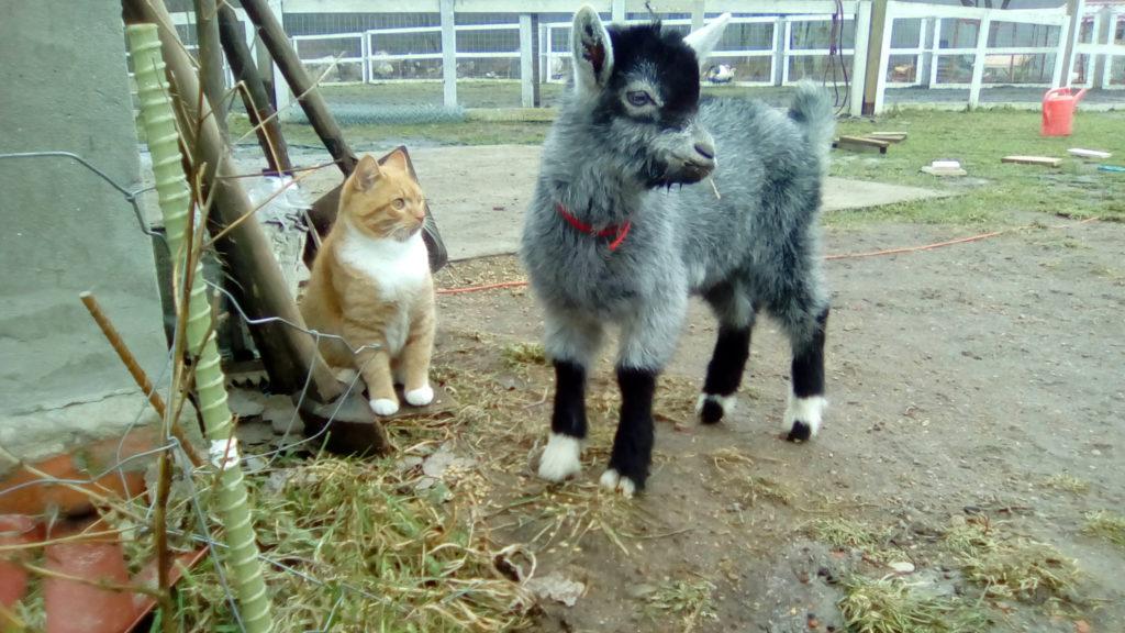 Нафаня и кот. Полесск. Пони ферма.