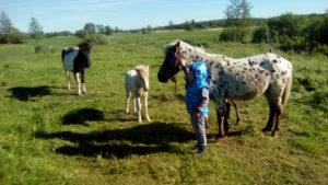 Экскурсии для детей. Пони ферма. Калининград.