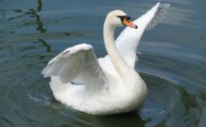 Лебеди. Полесск. Шолохово
