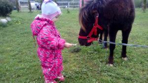 Кормление пони. Калининград. Пони ферма.