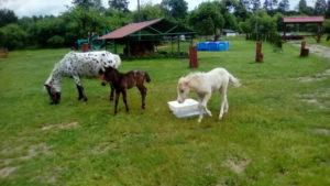 Детский отдых. Экскурсия. Пони ферма. Полесск.