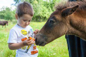 Отдых ребенка с пони. Конек Горбунок.