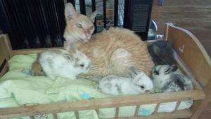 Кот и кролики. Кронек Горбунок. Полесск.