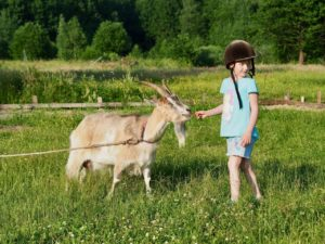 Детский отдых в Сосновске